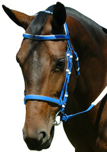 pvc racing bridle